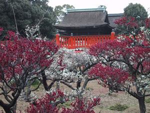大阪・道明寺天満宮の梅園